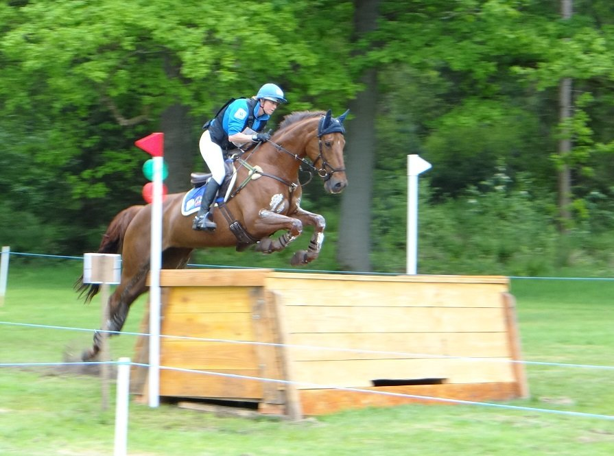 Jalapeno, 1st place CIC1* Maarsbergen 2015